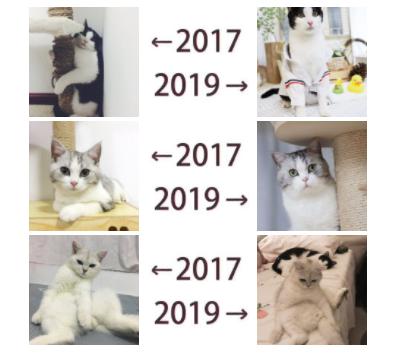"""朋友圈""""←2017 2019→""""梗含义出处介绍"""