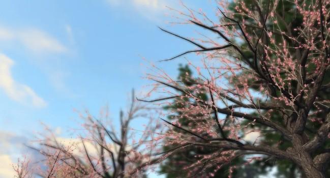 《明日之后》樱花种子获得方法介绍