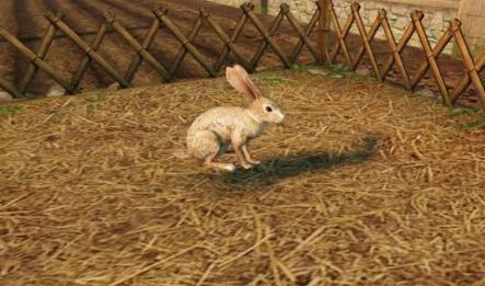 《明日之后》兔子作用介绍