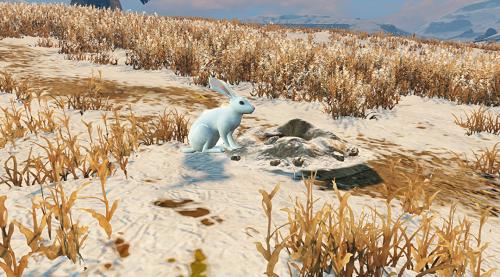 《明日之后》白兔抓捕方法和位置介绍